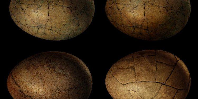 Ученые из Чили обнаружили самое большое яйцо динозавра