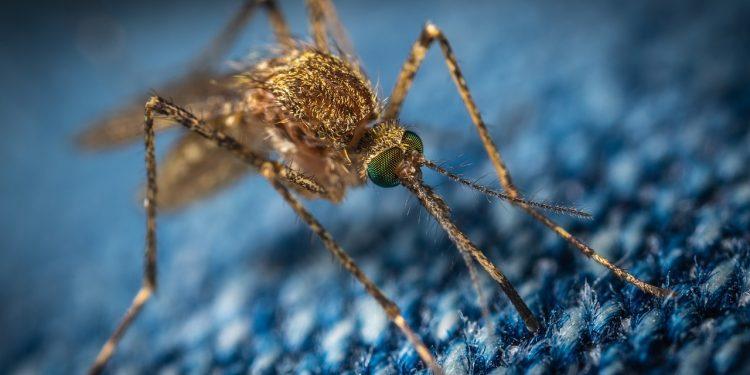 В Башкирии борются с нашествием комаров