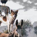 Биологи хотят создать единый атлас живых существ на Земле