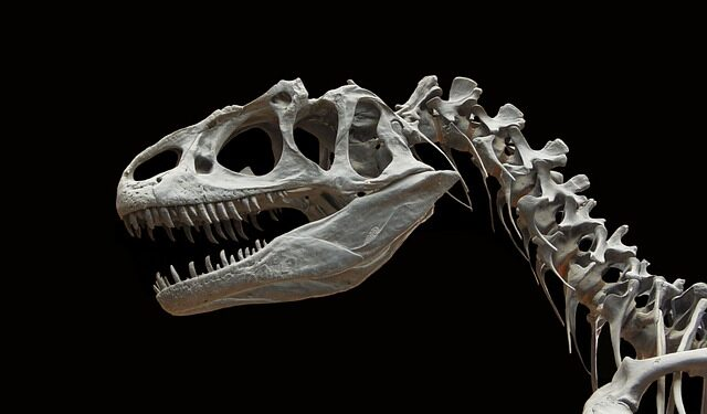На Аляске найден фрагмент окаменелой челюсти редкого динозавра