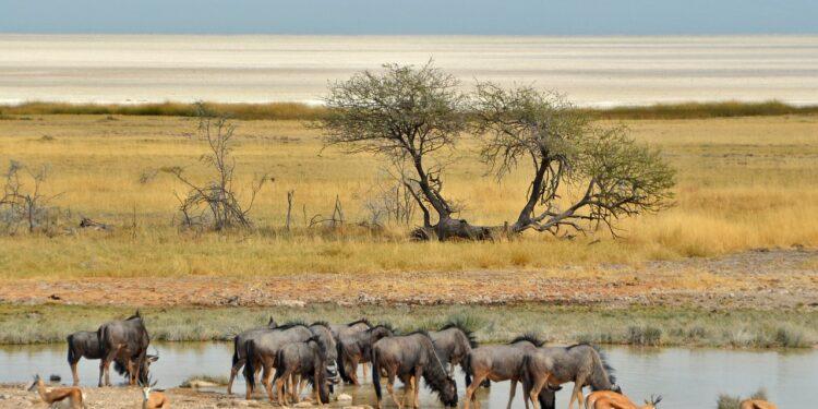 Африка может расколоться на две части и образовать новый океан