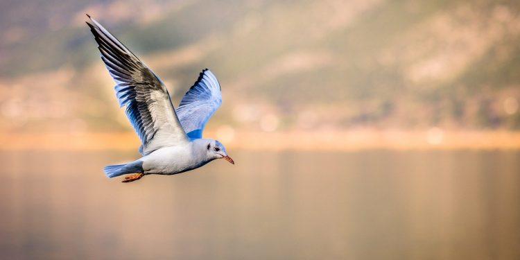 Учёные нашли аналог утренней зарядки у птиц