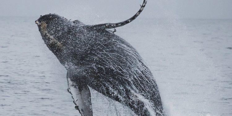 На Сахалине после шторма на берегу обнаружили неизвестное существо