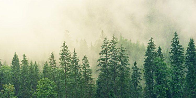 Листья деревьев помогли измерить загрязнение воздуха