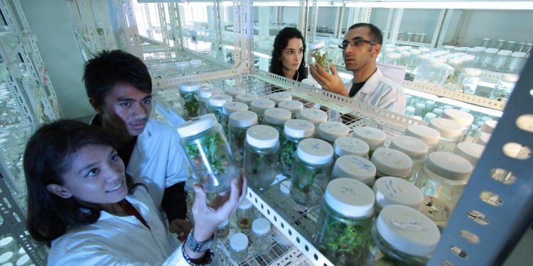 Ученые из США научились успешно «заживлять» нервы
