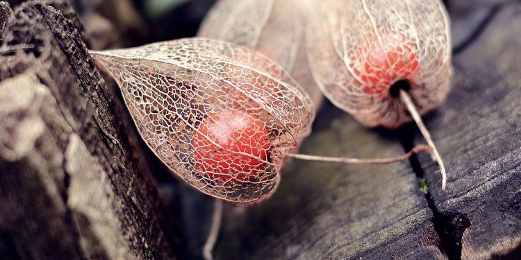 Избыток сахара в крови предложили снижать «золотой ягодой»