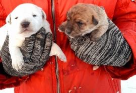 Чудом избежавшие смерти щенки радуются каждому дню и хотят увидеть мир за пределами кочегарки