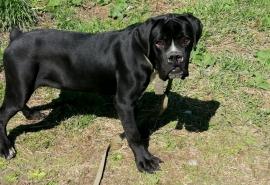 Выброшенный на помойку омский пес редкой породы Арчибальд обзавелся своим домом, подружкой и приоделся