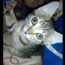 Котенок Отморозок едва не замерз насмерть в Омске, но стал звездой соцсетей