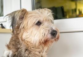 Умиравшая в маленьком городке Омской области собака Санни стала уверенной в себе блондинкой-столичной ...