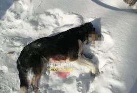 В Чкаловском поселке произошло хладнокровное убийство точным выстрелом