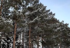 На севере Омской области ликвидировали две администрации сельских поселений