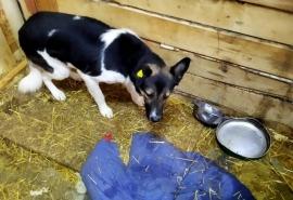 Спасенный с омского острова пес Робинзон перестал чураться людей и хочет подружиться, но очень стесняется