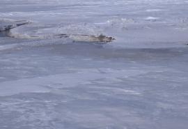 Фонтан неизвестной жидкости затопил дорогу из Омска в Казахстан