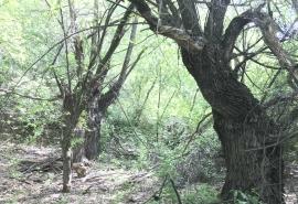 На пяти улицах Омска обещают масштабную высадку деревьев