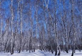 Названа дата потепления в Омской области