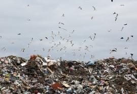 В Омске пес-активист объявил войну людскому мусору