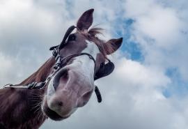 В Омской области лошадь серьезно покалечила 6-летнюю девочку